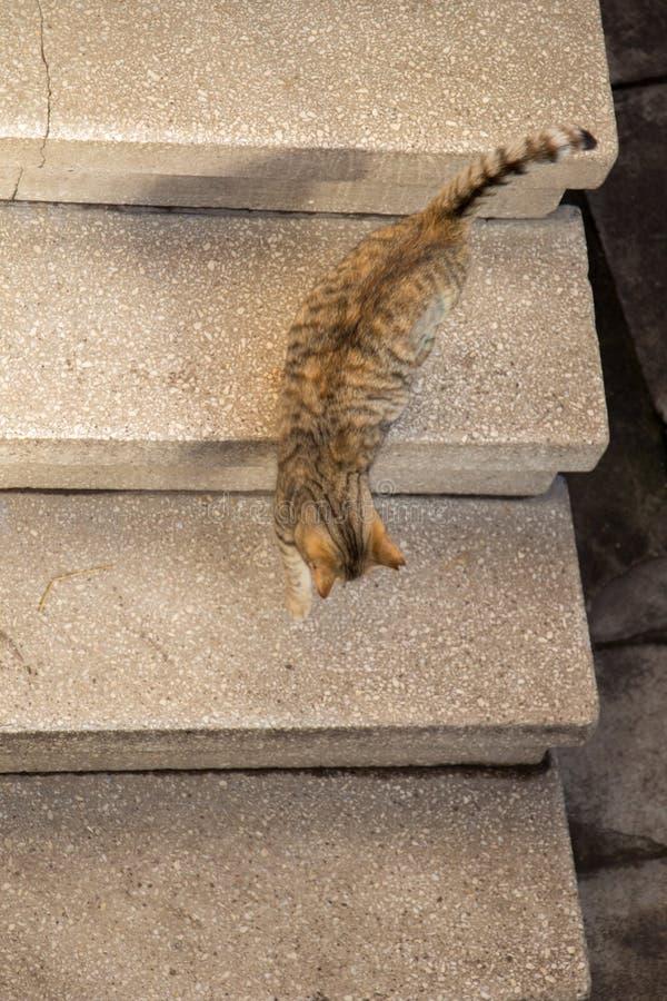 Gato bonito como o animal doméstico na vista imagens de stock royalty free