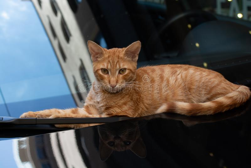 Gato bonito como o animal doméstico na vista imagem de stock royalty free