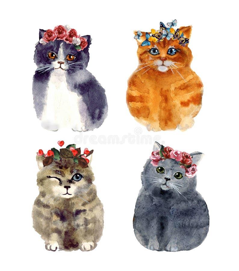 Gato bonito da aquarela com as flores no fundo branco ilustração royalty free