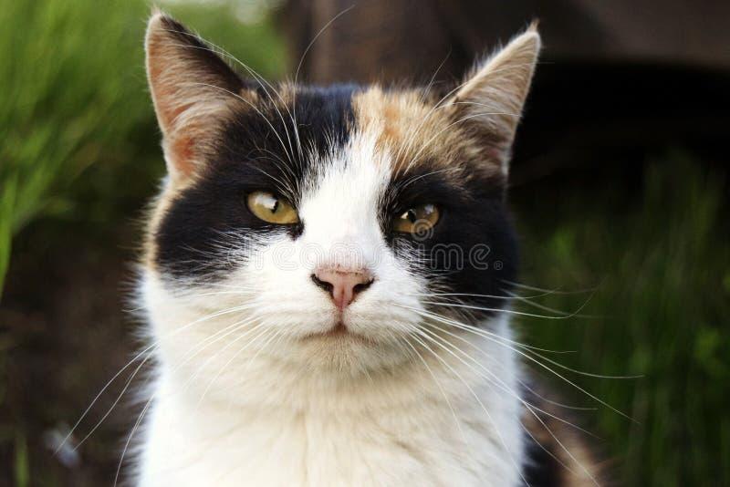 Gato bonito da casa imagem de stock royalty free