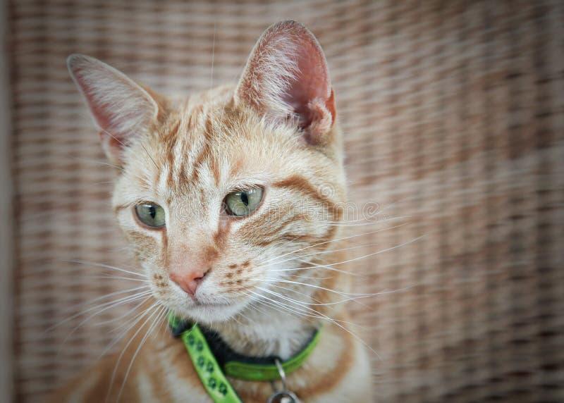 Gato bonito do gengibre imagem de stock