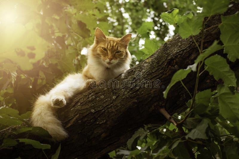 Gato bonito do gengibre que senta-se no ramo de árvore fotos de stock