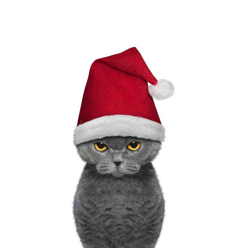 Gato bonito em um chapéu de Santa Claus fotos de stock