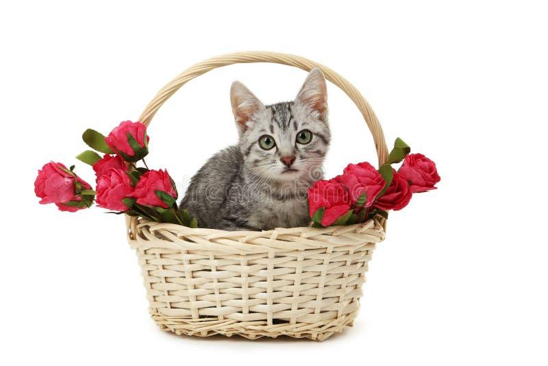 Gato bonito na cesta com as flores isoladas em um branco fotos de stock