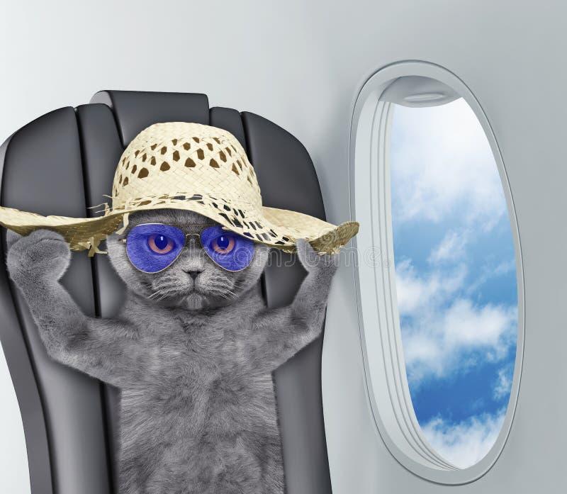 Gato bonito no chapéu a bordo do airplain foto de stock royalty free