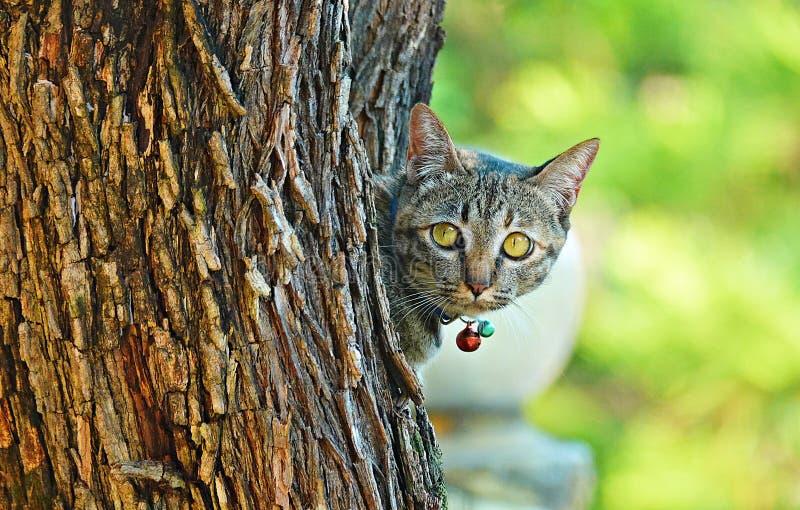 Gato bonito no jardim foto de stock