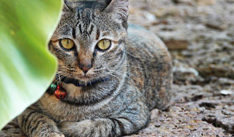 Gato bonito no jardim fotos de stock royalty free