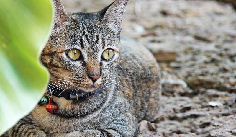 Gato bonito no jardim fotografia de stock