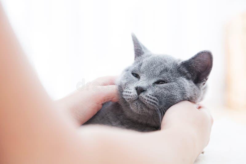 Gato bonito novo que joga na pele branca foto de stock