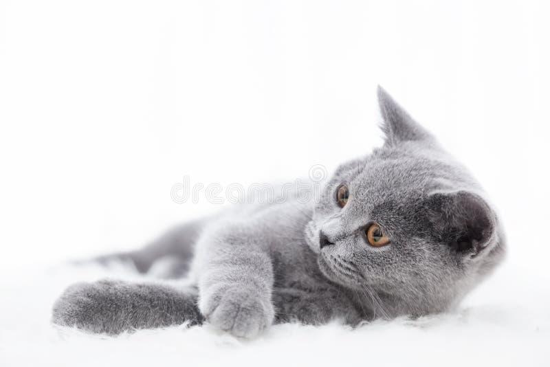 Gato bonito novo que joga na pele branca imagem de stock