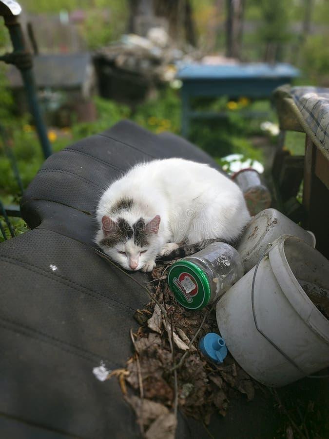 Gato branco! fotografia de stock royalty free