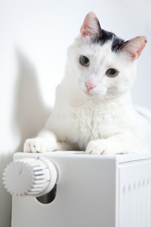 Gato branco bonito que relaxa no close up do radiador fotografia de stock royalty free