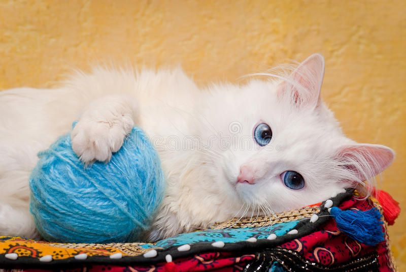 Gato branco com olhos azuis Profundidade de campo rasa foto de stock royalty free