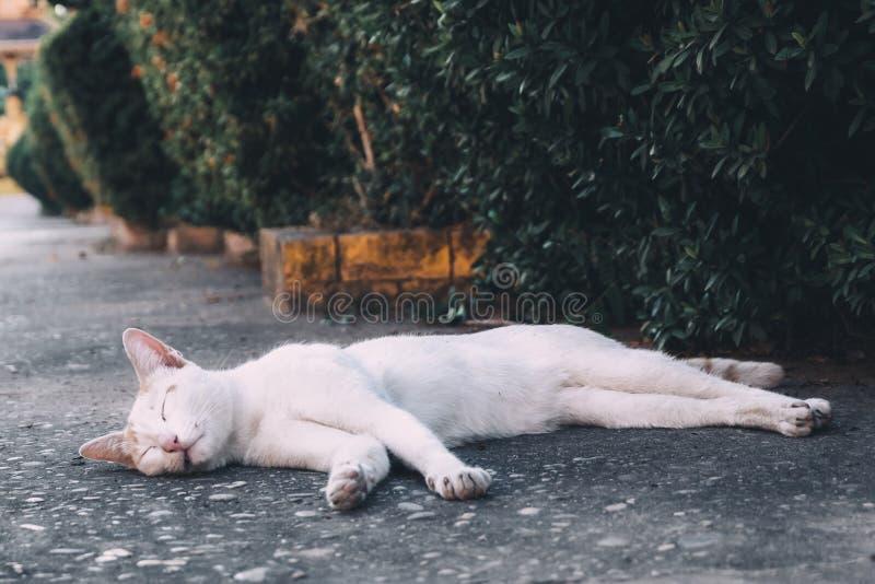 Gato branco da rua que descansa no assoalho perto das árvores fotografia de stock