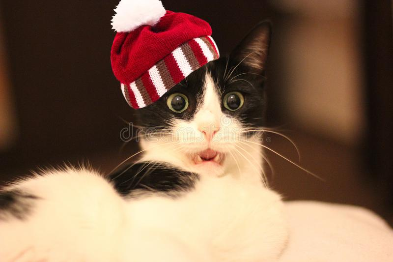 Gato branco e preto surpreendido com o chapéu listrado feito malha com pompon fotos de stock royalty free
