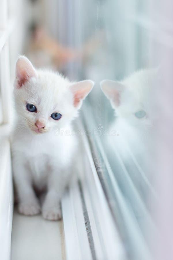 Gato branco, gatos, animais, animais de estimação, vaquinha, gatinhos, gatos felinos, pequenos, imagens de stock royalty free