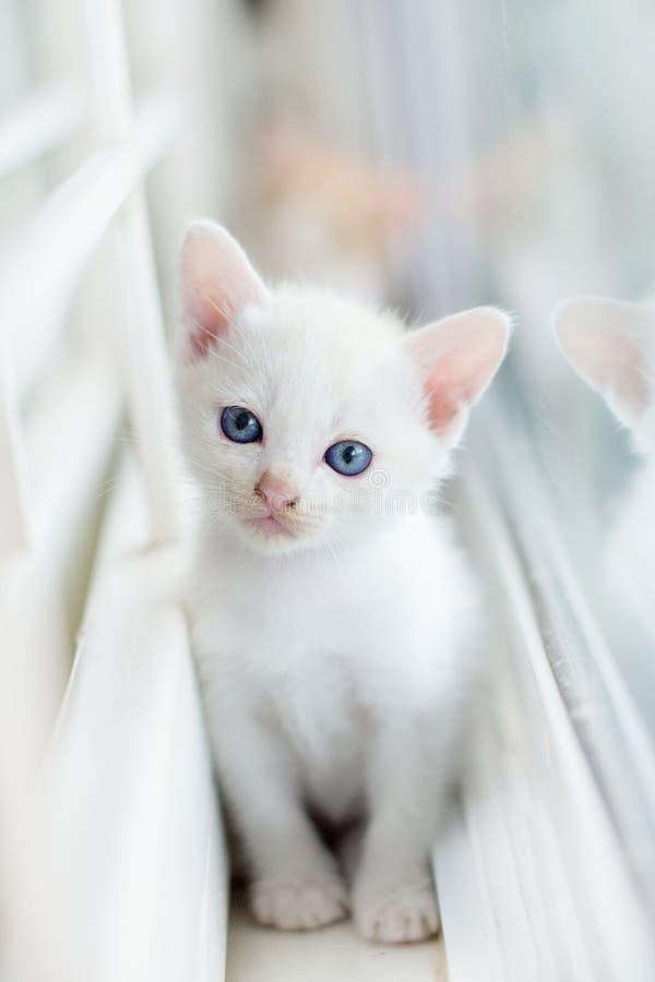 Gato branco, gatos, animais, animais de estimação, vaquinha, gatinhos, gatos felinos, pequenos, foto de stock