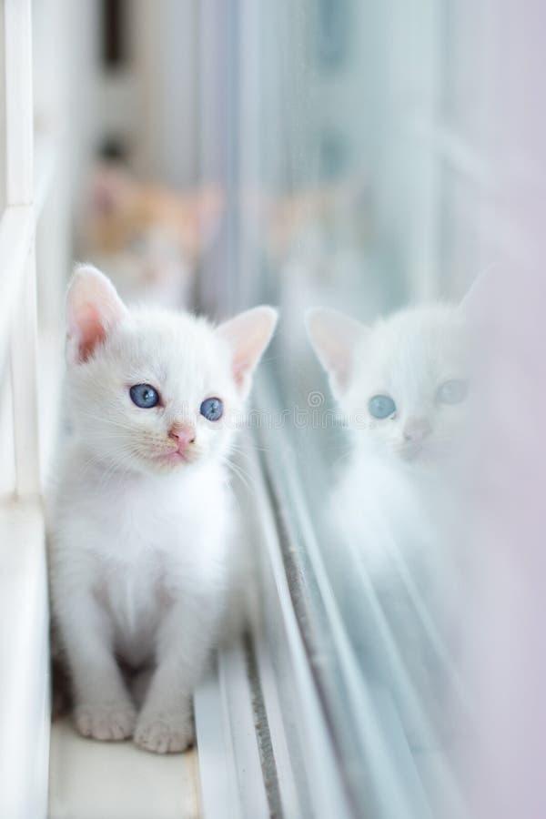 Gato branco, gatos, animais, animais de estimação, vaquinha, gatinhos, gatos felinos, pequenos, foto de stock royalty free