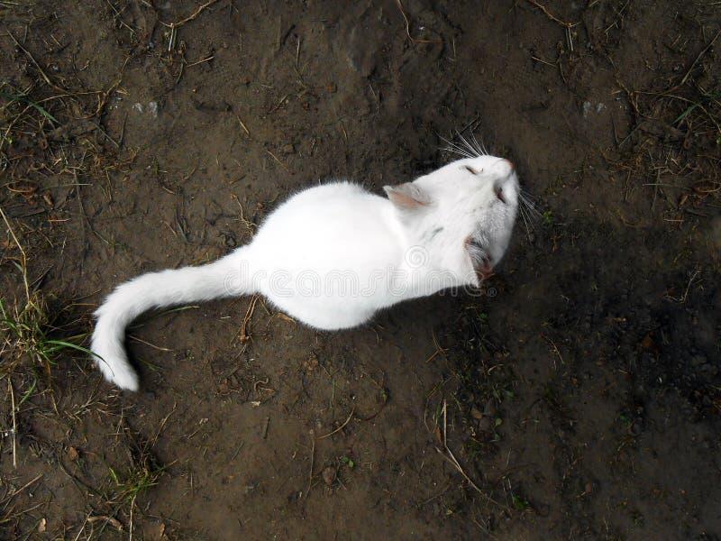 Gato branco na terra escura imagem de stock royalty free