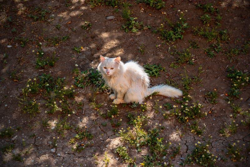Gato branco na terra escura Da vista acima imagens de stock