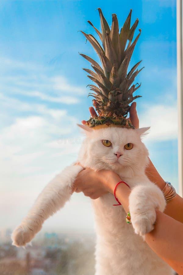 Gato branco peludo bonito com o abacaxi na cabeça fotos de stock
