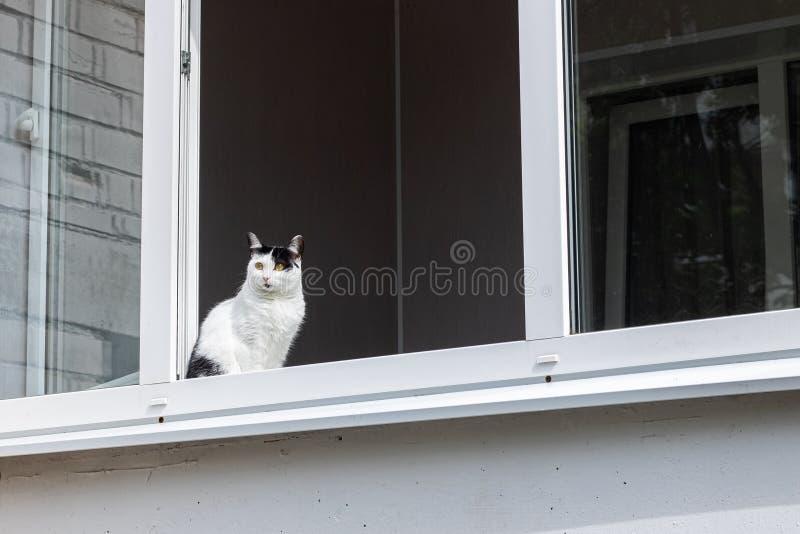 Gato branco preto que senta-se na janela em casa imagem de stock royalty free