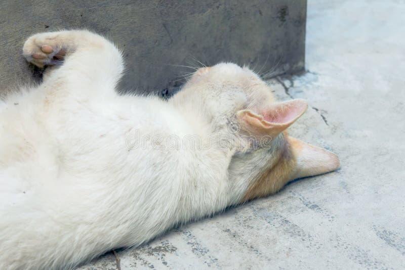 Gato branco que toma quarenta piscadelas com orelhas conscientes fotografia de stock