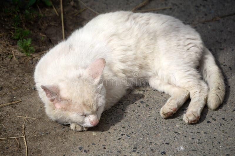 Gato branco sujo velho abandonado só e triste que esconde sob uma sombra do veículo, vista abstraída afastado com pálido - olhos  fotografia de stock