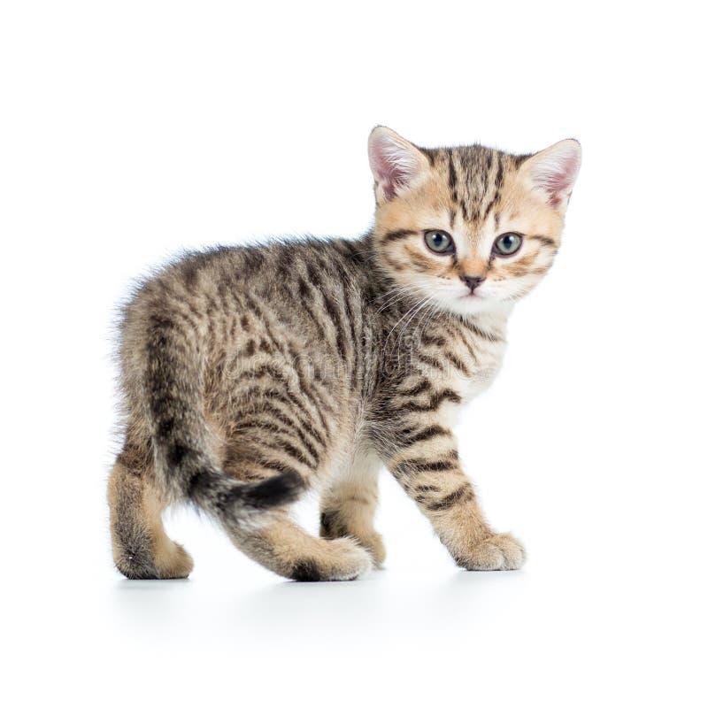 Gato brincalhão do gatinho isolado no branco imagens de stock