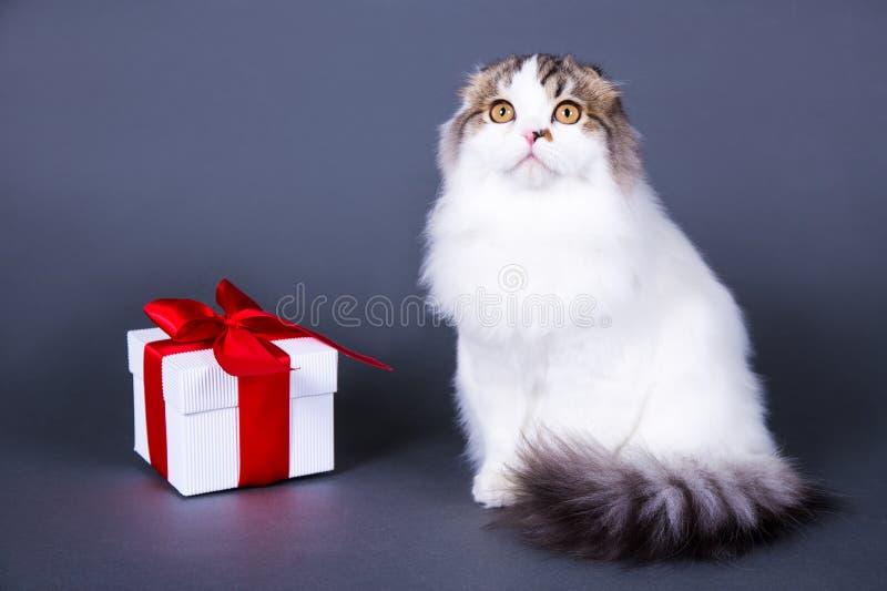 Gato británico con la caja de regalo sobre gris foto de archivo libre de regalías