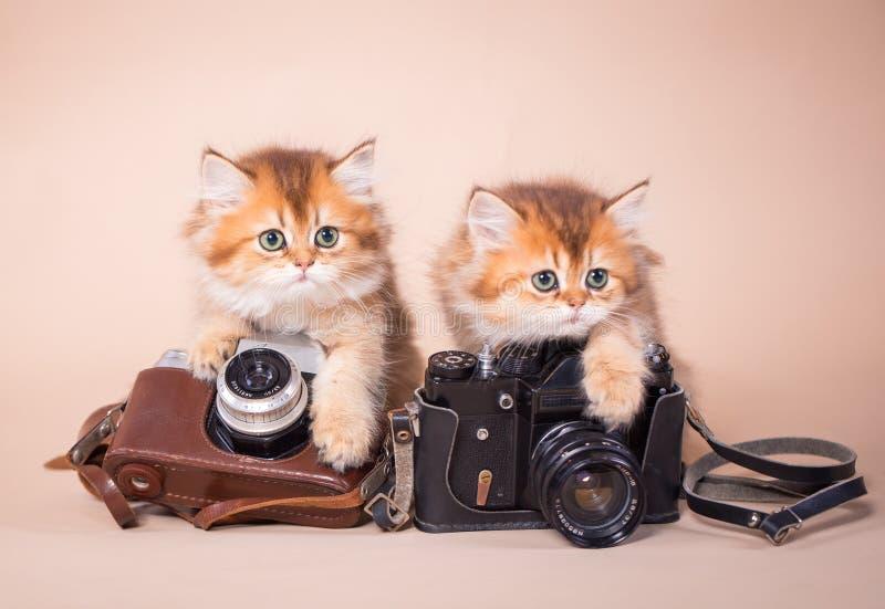 Gato británico del shorthair con la cámara foto de archivo