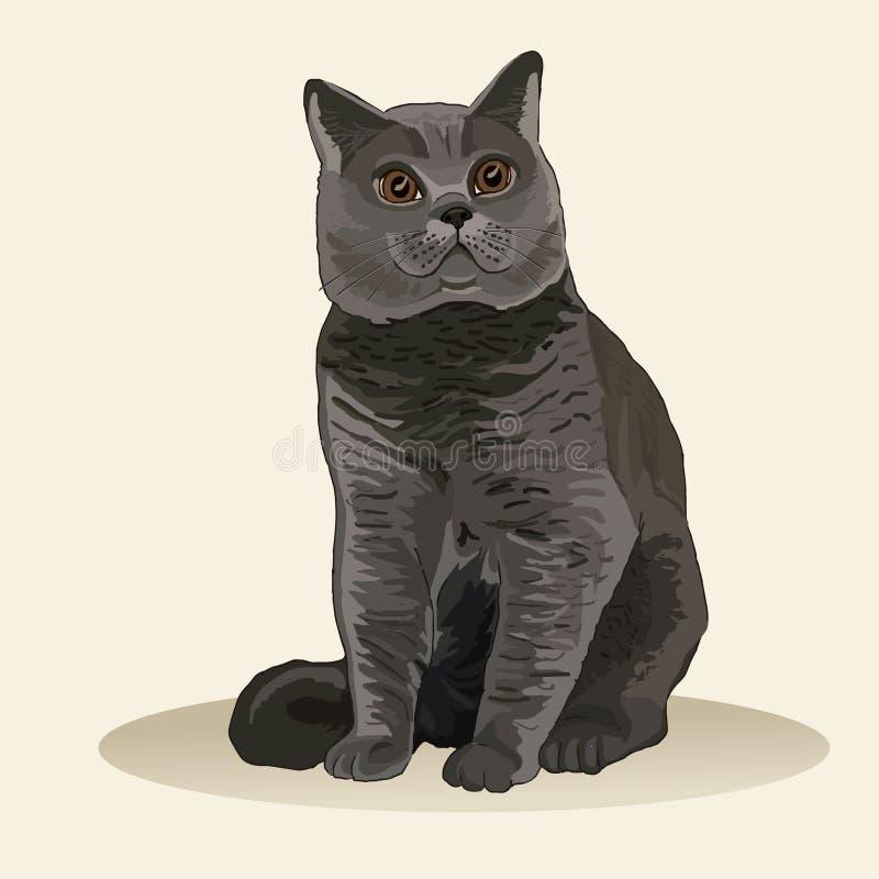 Gato britânico de Shorthair Raça do gato Animal de estimação favorito Gatinho macio bonito Ilustração realística do vetor ilustração royalty free