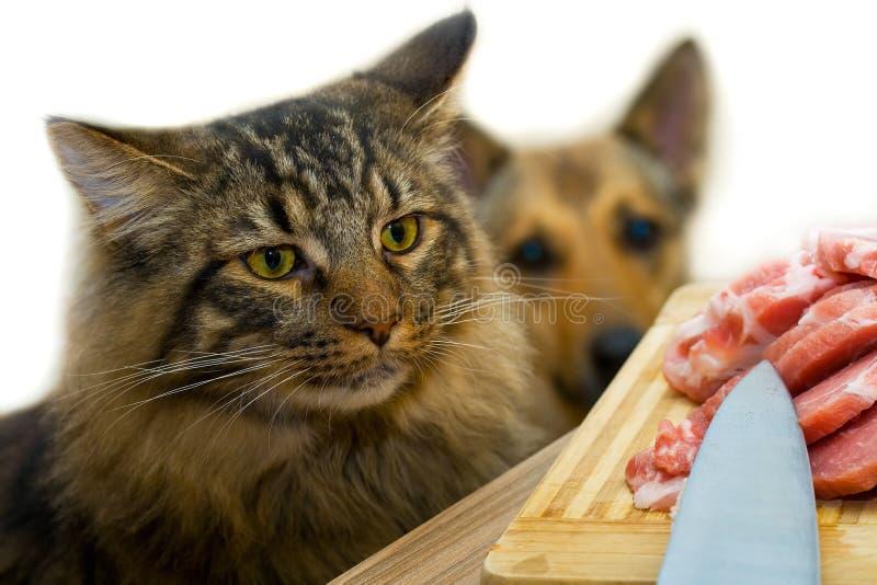 Gato, cão e carne foto de stock royalty free