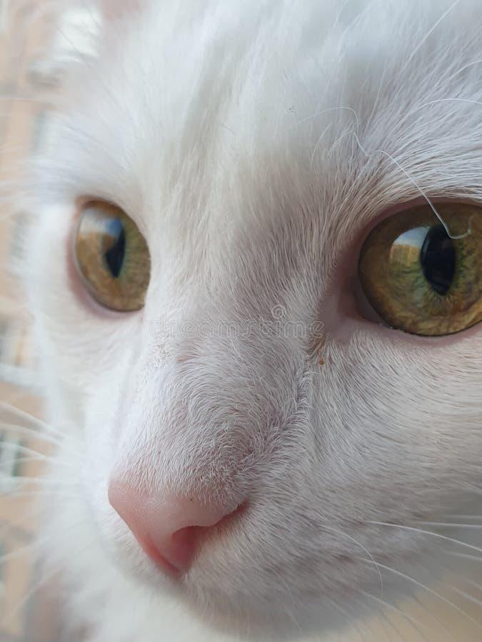 Gato cósmico con los ojos verdes imagen de archivo
