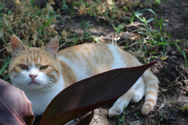 Gato-caçador imagens de stock royalty free