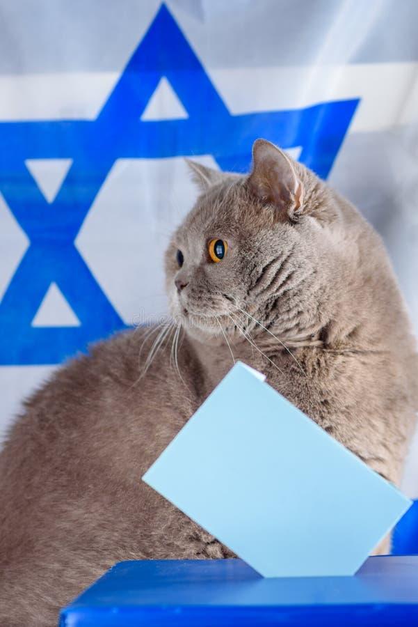 Gato, caja del voto y votación lindos en una urna el día de elección sobre fondo de la bandera de Israel imagen de archivo libre de regalías