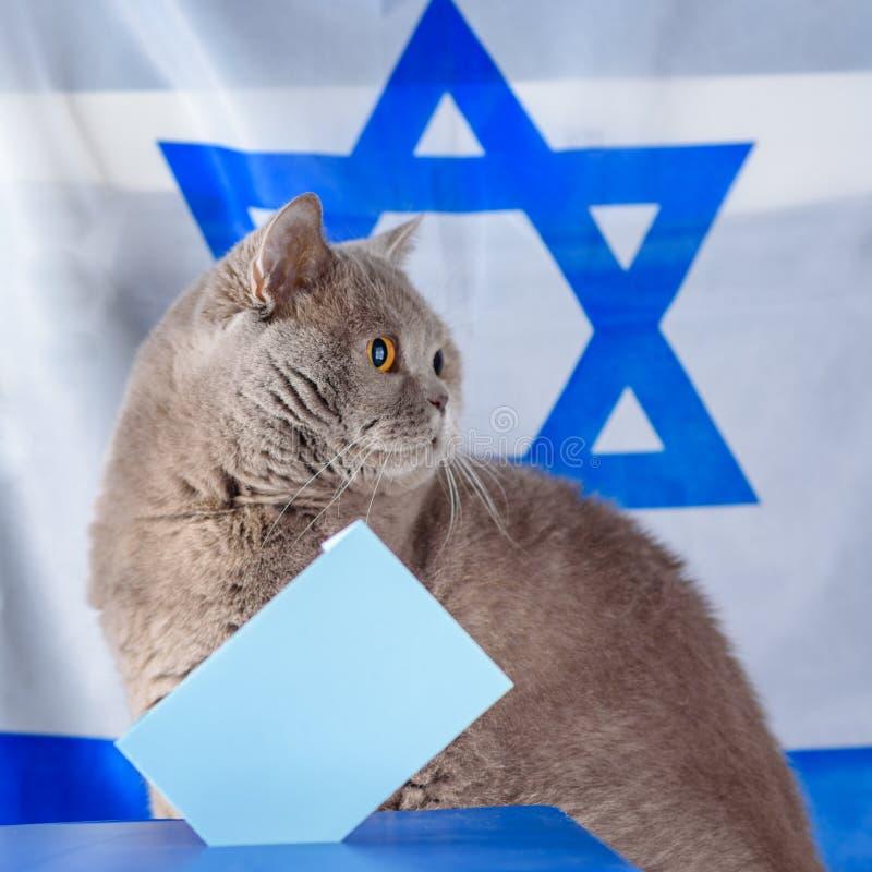 Gato, caja del voto y votación lindos en una urna el día de elección sobre fondo de la bandera de Israel foto de archivo