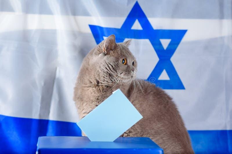 Gato, caja del voto y votación lindos en una urna el día de elección sobre fondo de la bandera de Israel fotos de archivo