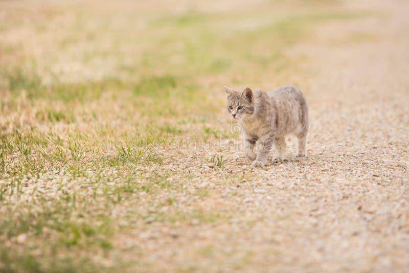 Gato callejero de vagabundeo fotografía de archivo