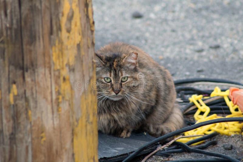 Gato callejero el mirar fijamente fotos de archivo