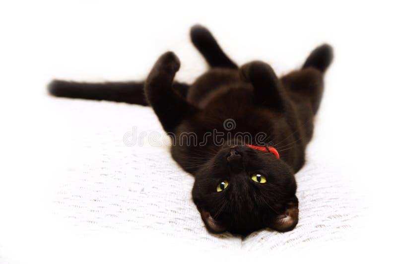 Gato cansado imagen de archivo libre de regalías