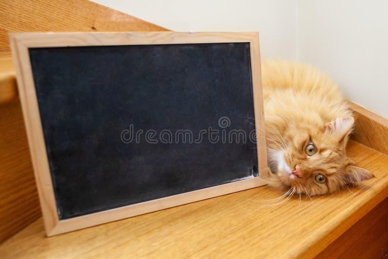 Gato cansado del jengibre que miente en las escaleras de madera ilustración del vector