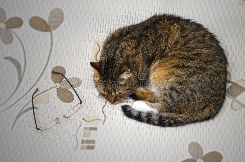 Gato cansado que duerme en la cama imagenes de archivo