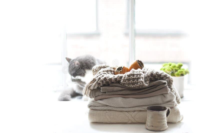Gato casero en la ventana, mucho otoño caliente de la ropa, de la bufanda y de la fruta del invierno Atmósfera acogedora y la ciu imagen de archivo