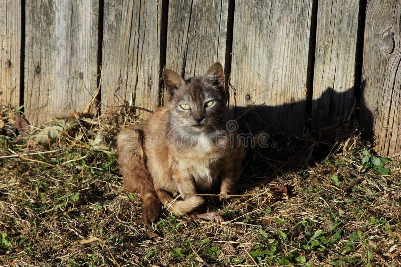 Gato cerca de la cerca foto de archivo libre de regalías