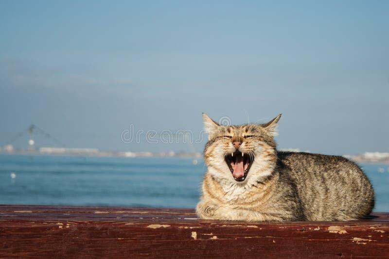 Gato cinzento bonito poderoso grande que senta-se no banco No fundo é o mar fotografia de stock