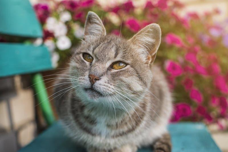 Gato cinzento bonito que senta-se em um banco de madeira fora Um gato cinzento senta-se em um banco de madeira perto da casa O ga fotos de stock royalty free