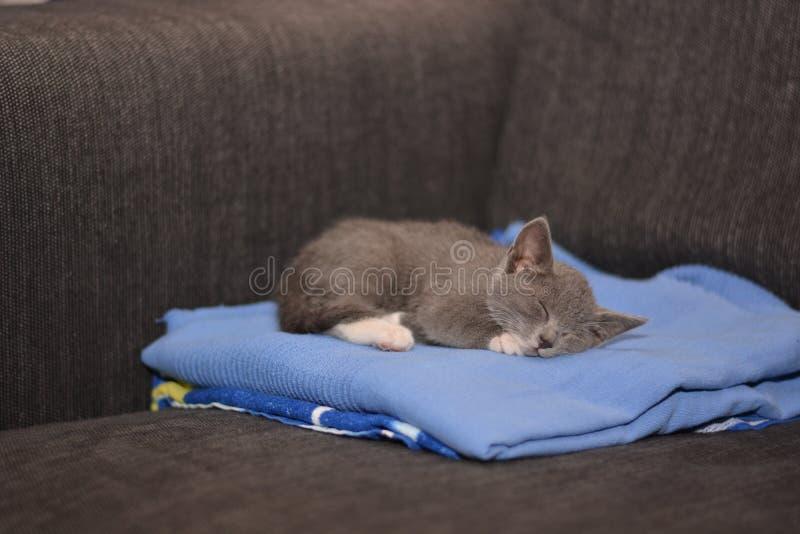 Gato cinzento fotografia de stock