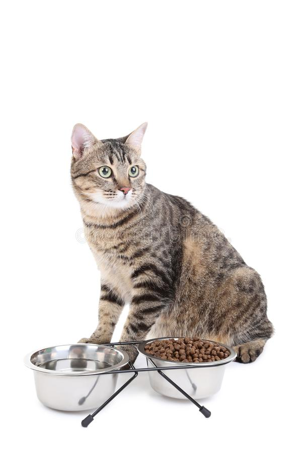 Gato cinzento com as bacias de alimento fotos de stock