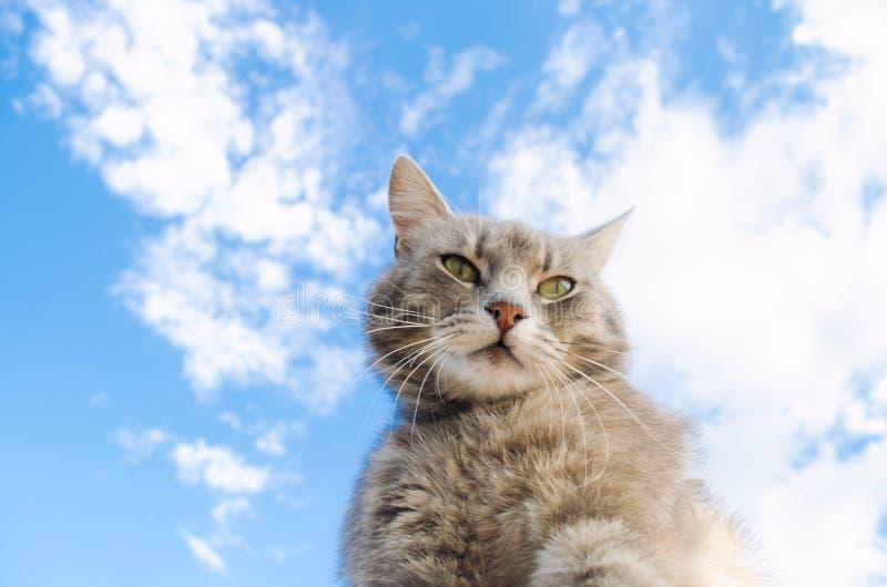 Gato cinzento engraçado em um fundo do céu azul Retrato do animal de estima??o Gatinho listrado animal Lugar para o texto fotos de stock royalty free